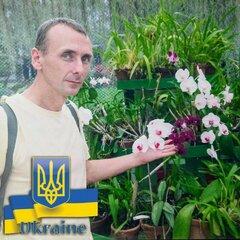 AlexNalivko